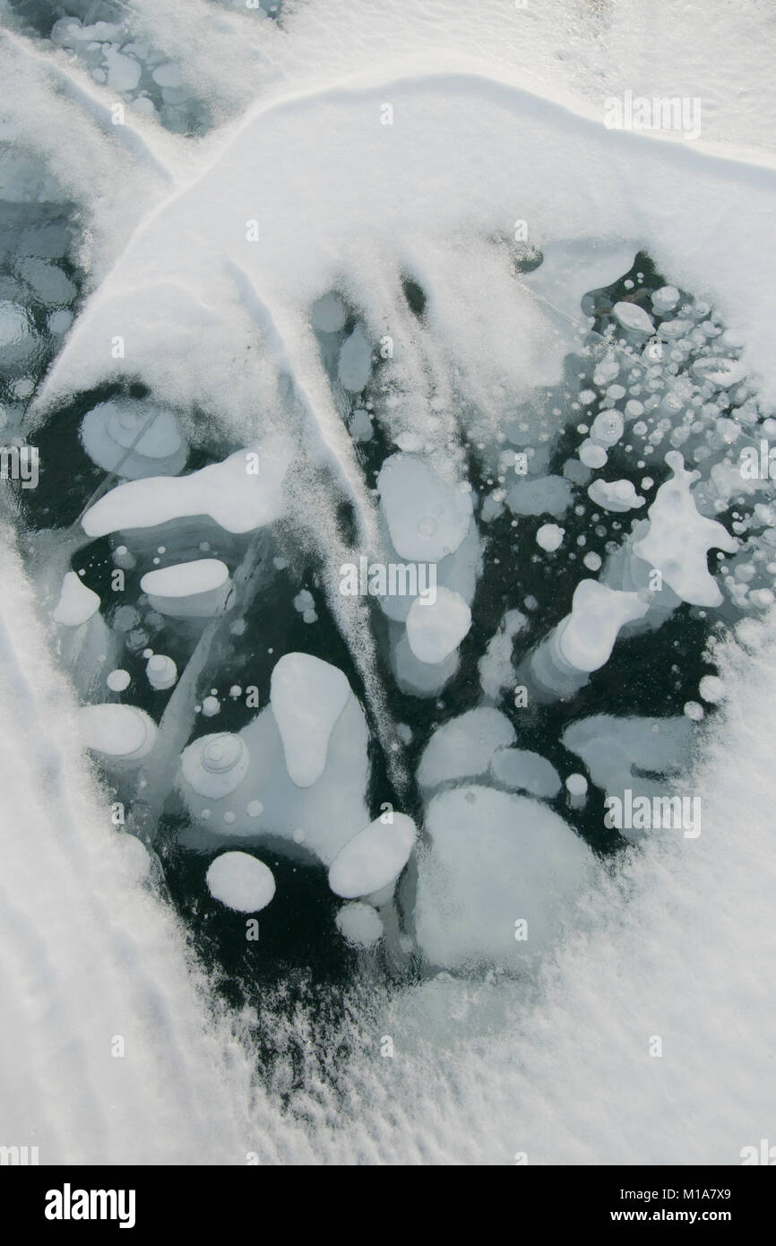Frozen methane bubbles, Winter, Abraham Lake, Canadian Rockies, Alberta, CANADA - Stock Image