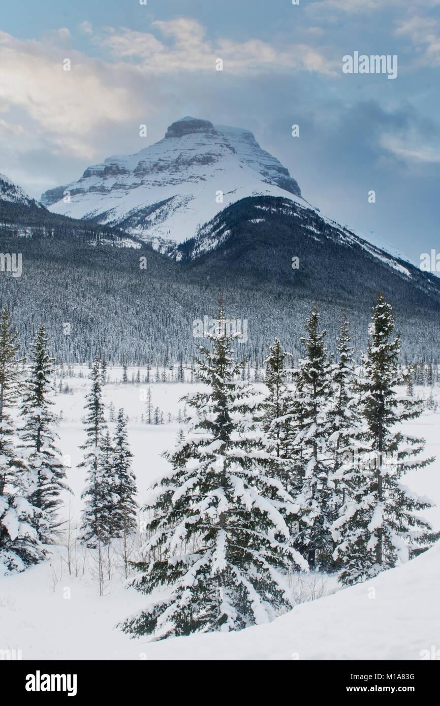 Winter scene, Graveyard Flats, Banff National Park, Canadian Rockies, Alberta, CANADA - Stock Image