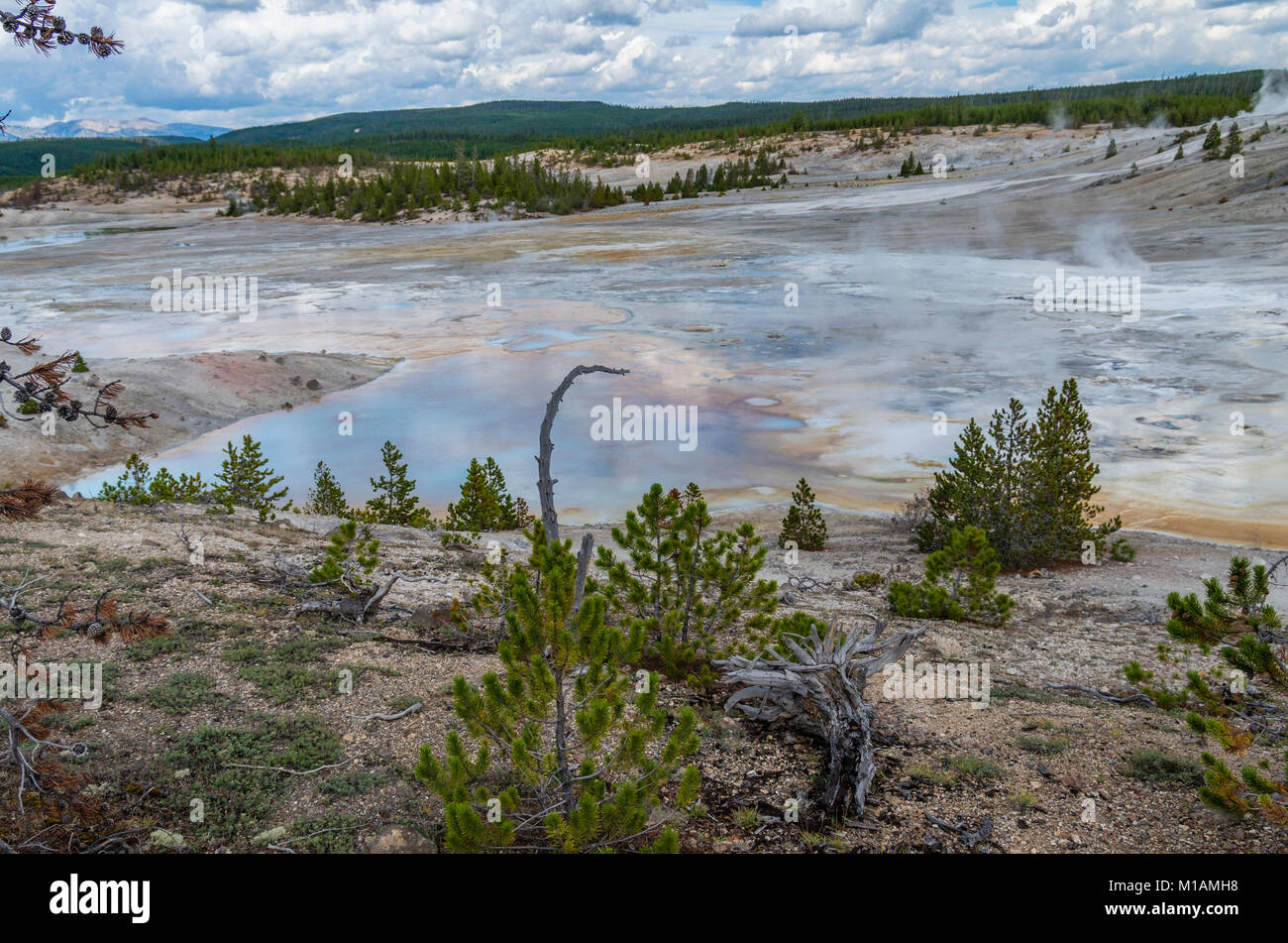 Steam and hot water flowing from the Porcelain Springs in Norris Geyser Basin.  Yellowstone National Park, Wyoming - Stock Image