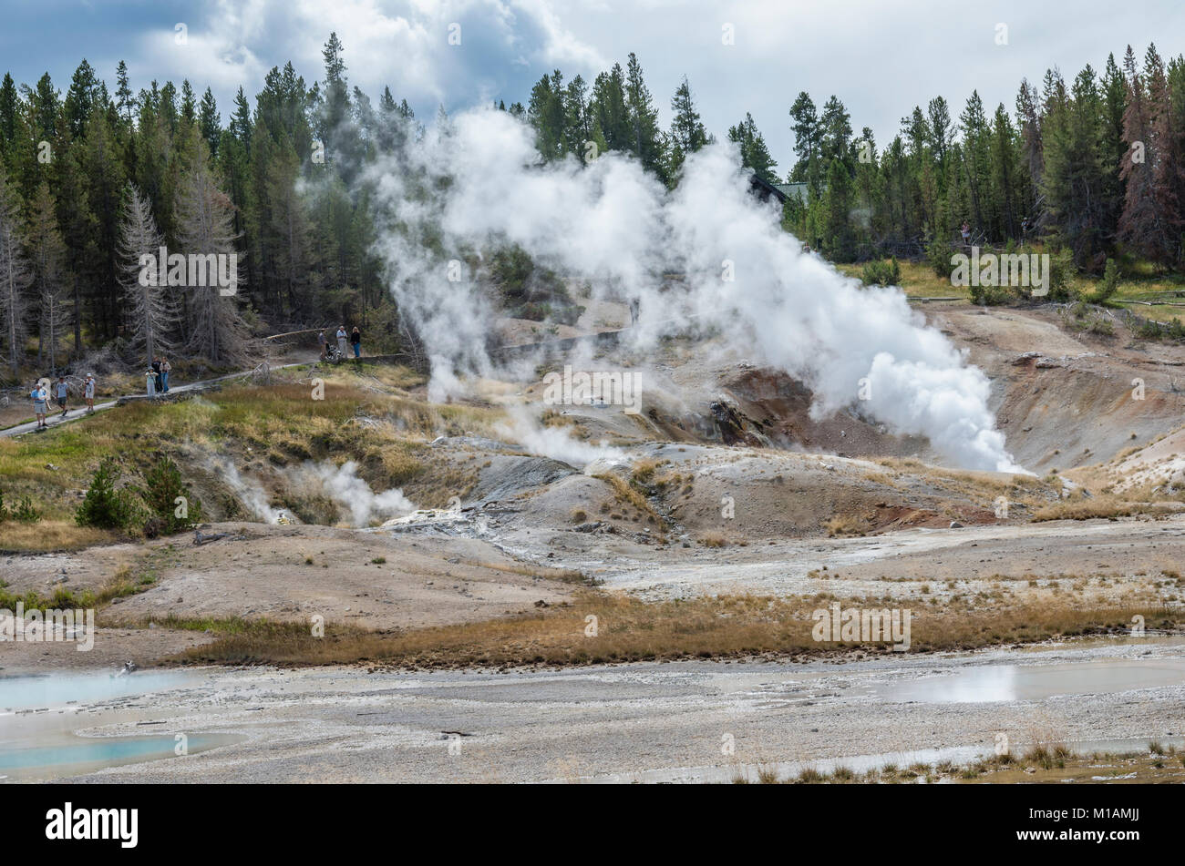 Geysers steaming in the Porcelain Basin area of the Norris Geyser Basin.  Yellowstone National Park, Wyoming USA - Stock Image