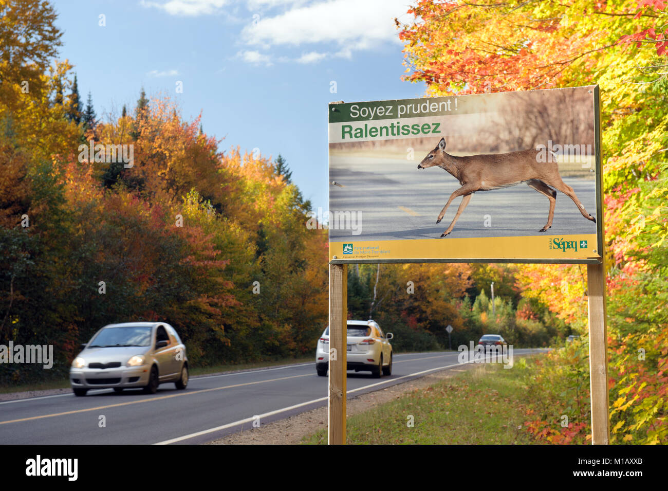 Roadside sign in French warning drivers about the danger of collision with wild animals crossing the road.  Mt Tremblant, Stock Photo