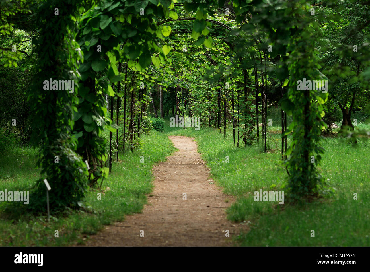 arch into a park in summer. green vine arch path - Stock Image