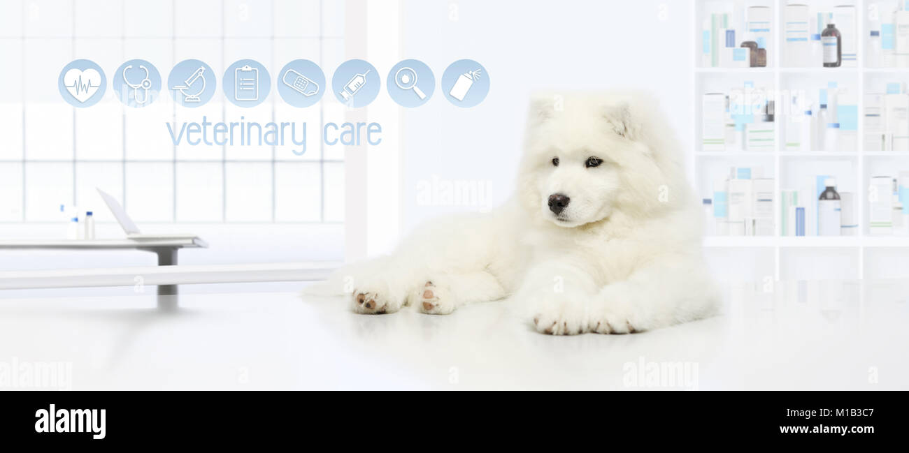 dog in vet clinic with veterinary care icons, veterinarian examination concept web banner - Stock Image