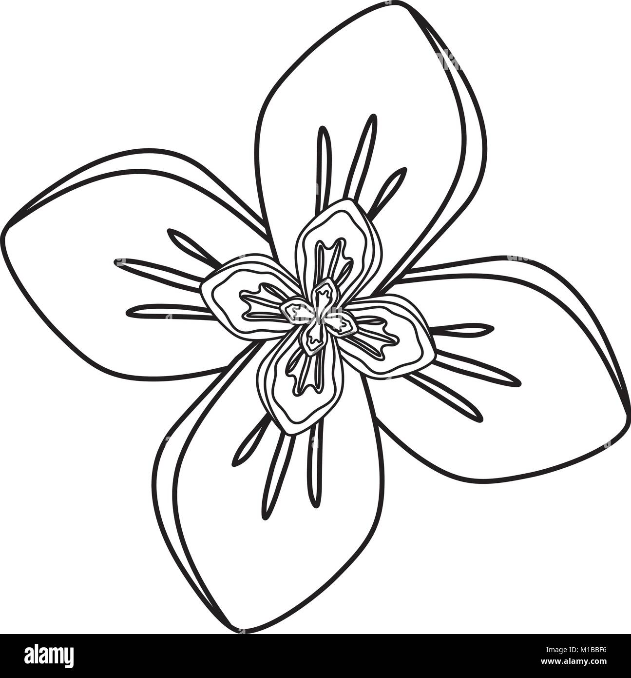 Four Petals Stock Vector Images