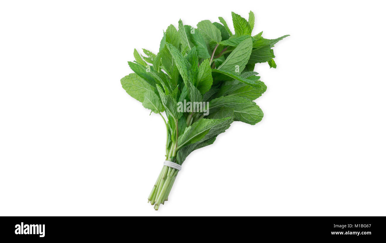 Overhead view of mint leaves in white background - Stock Image