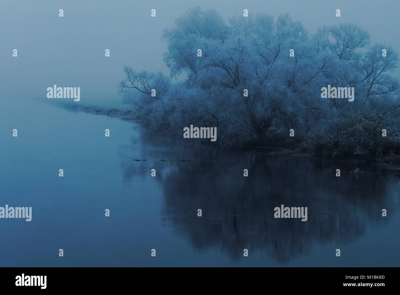 Trees covered with hoarfrost on a riverbank - Stock Image