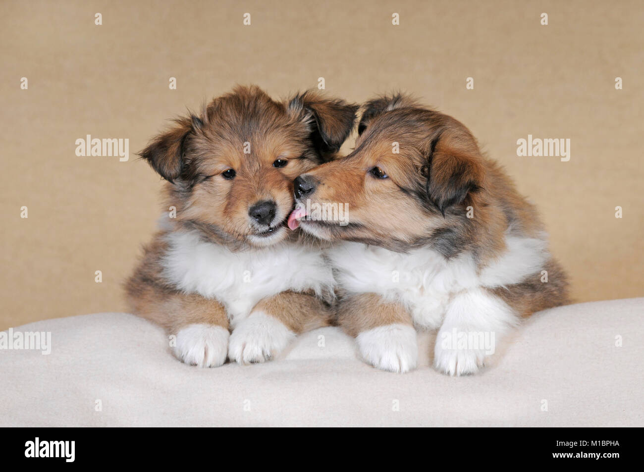 Love N Lick Puppy
