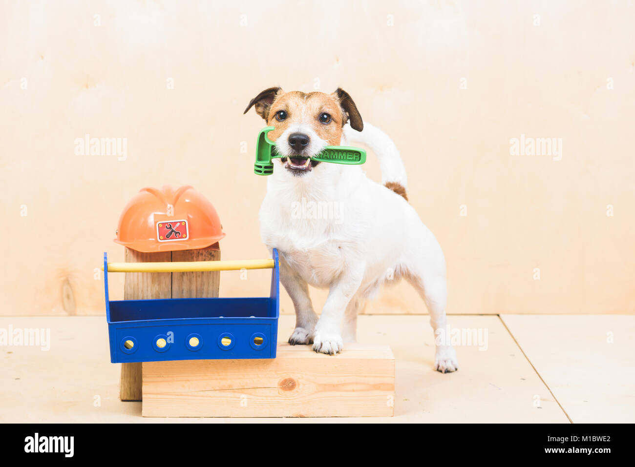 Do it yourself diy concept with funny dog as builders assistant do it yourself diy concept with funny dog as builders assistant solutioingenieria Choice Image