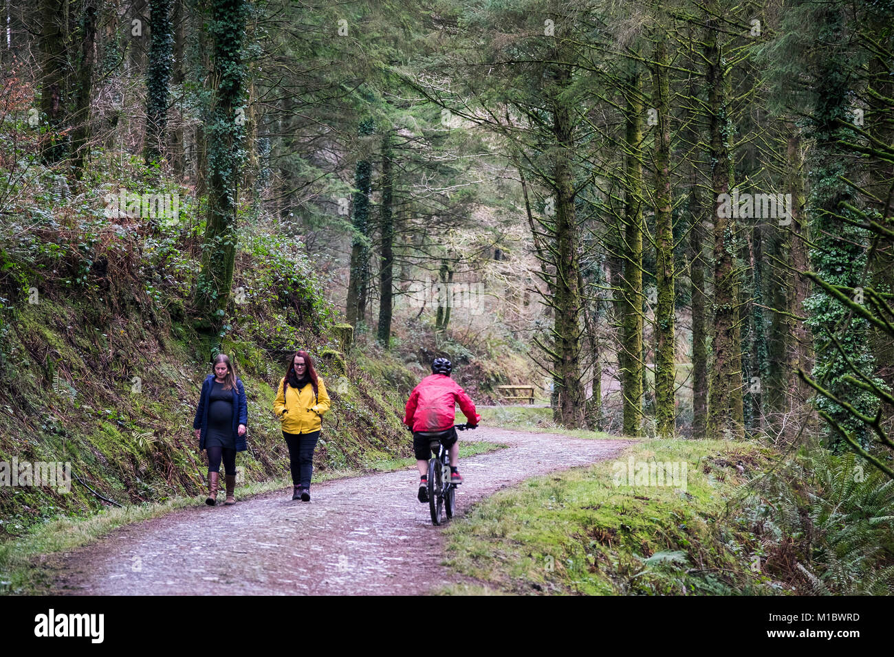 A mountain biker riding past two walkers on a trail in Cardinham Woods Bodmin Cornwall. - Stock Image