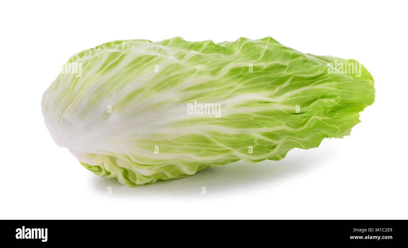 Fresh sugarloaf lettuce isolated on white background - Stock Image