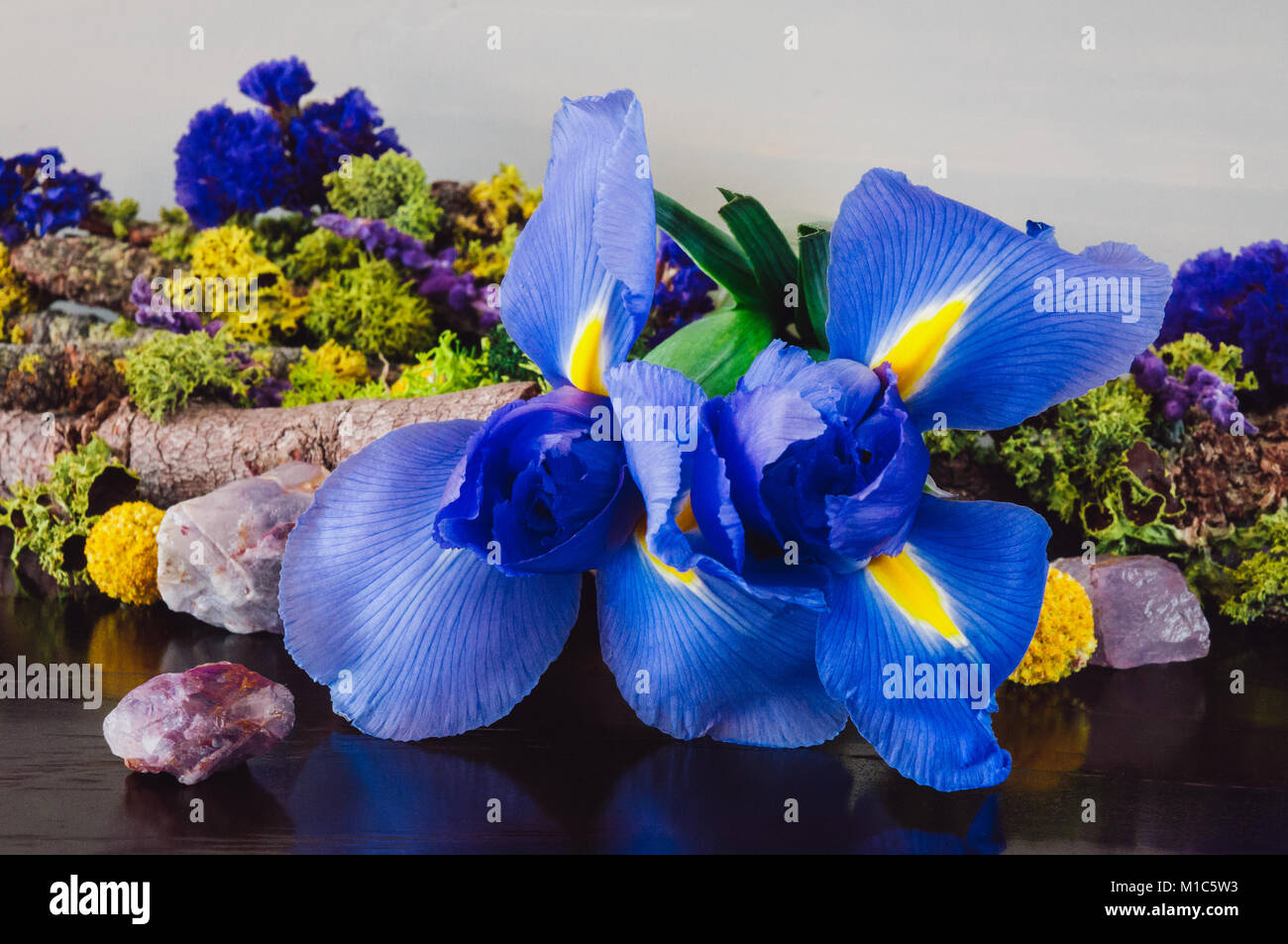 Iris Flowers with Amethyst and Dried Moss and Flowers - Stock Image
