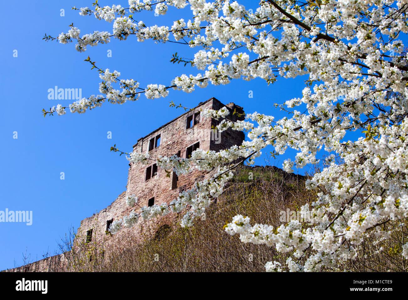 Hardenberg Castle, ruin near Nörten-Hardenberg, district of Northeim, Lower Saxony, Germany - Stock Image