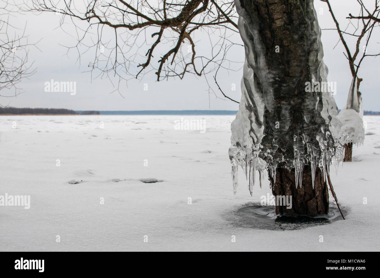 Icicles Tree Stock Photos & Icicles Tree Stock Images - Alamy