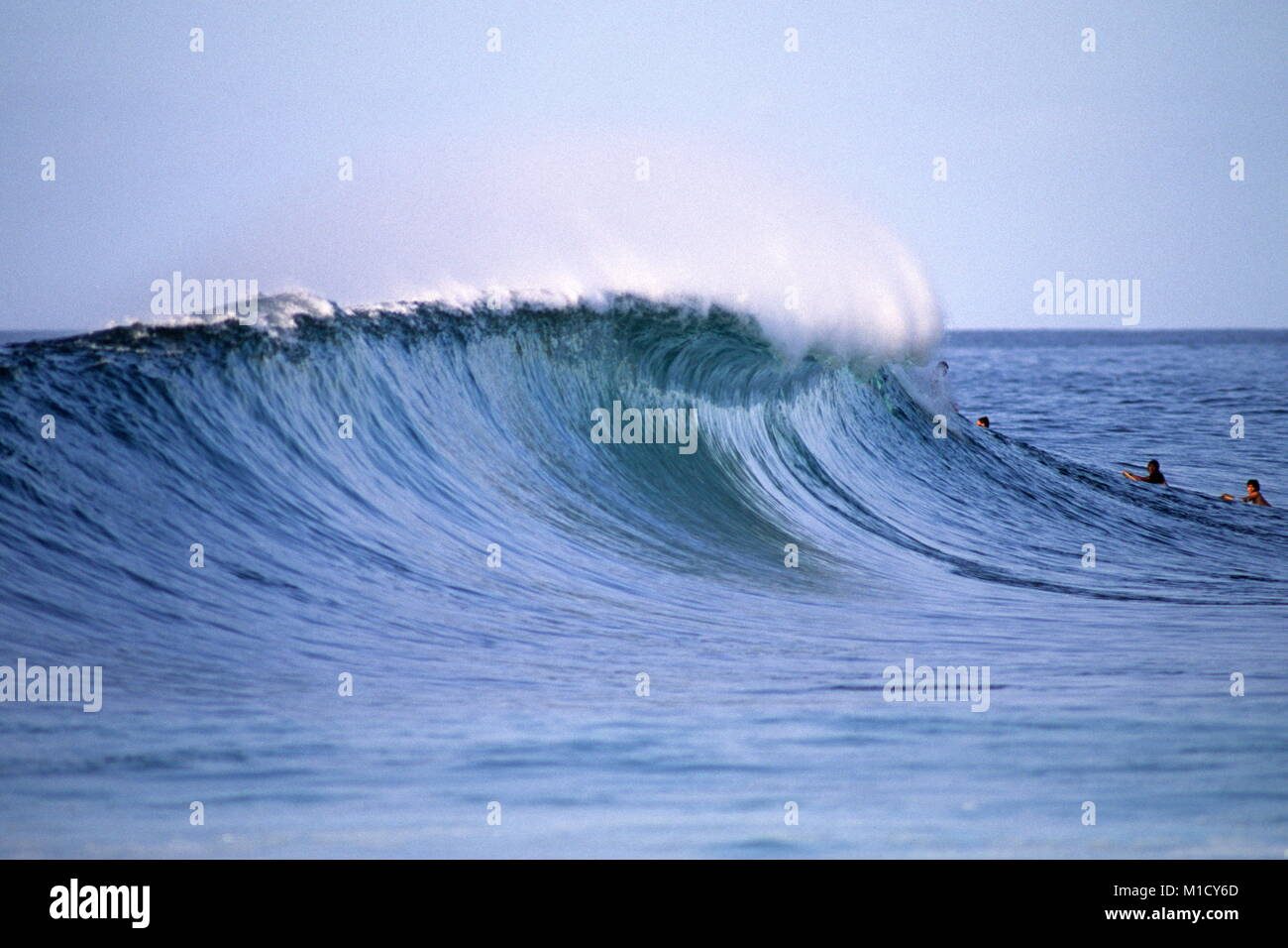 side view of perfect tubing wave  Pipeline Hawaii USA - Stock Image
