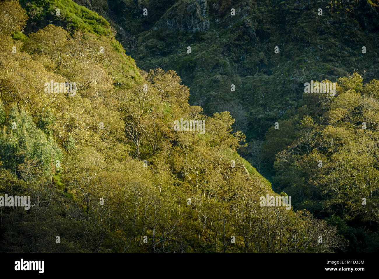 Forest, Central Mountains, Madeira, Portugal, Wald, Zentralgebirge - Stock Image
