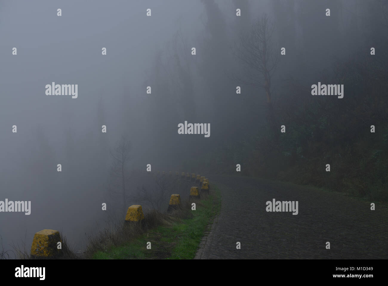 Fog, Mountain Road, Central Mountains, Madeira, Portugal, Nebel, Bergstrasse, Zentralgebirge - Stock Image