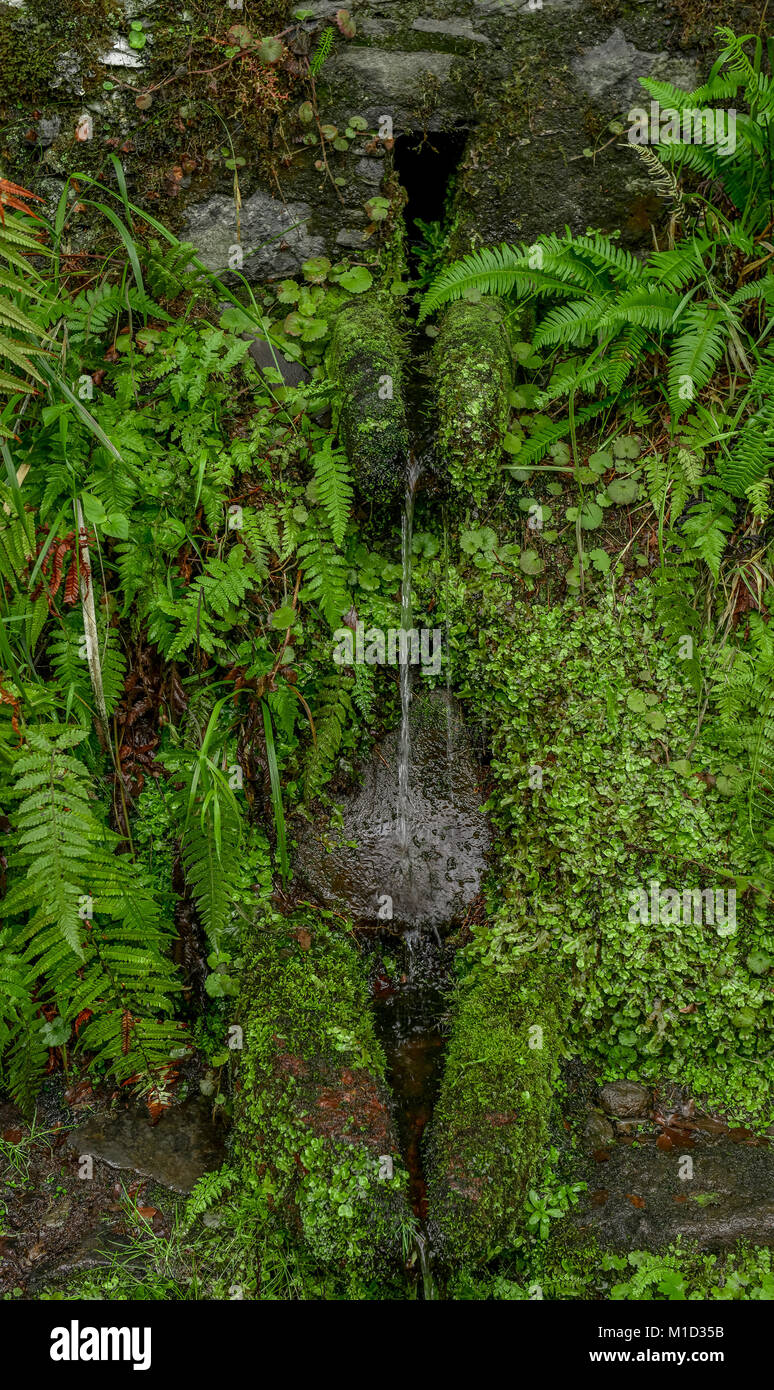 Source, Rabacal-Tal, Central Mountains, Madeira, Portugal, Quelle, Zentralgebirge - Stock Image