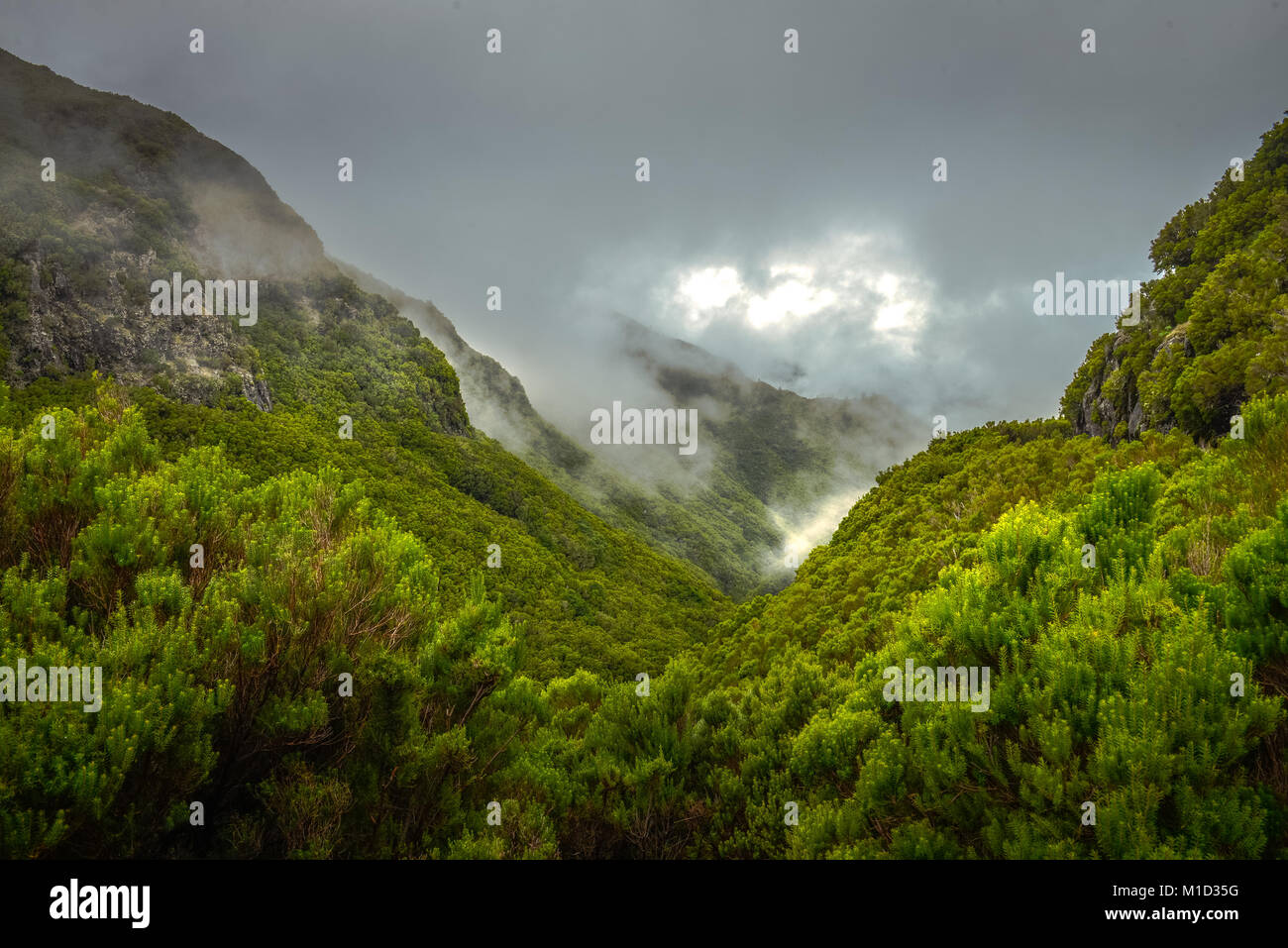 Rabacal-Tal, Central Mountains, Madeira, Portugal, Zentralgebirge - Stock Image