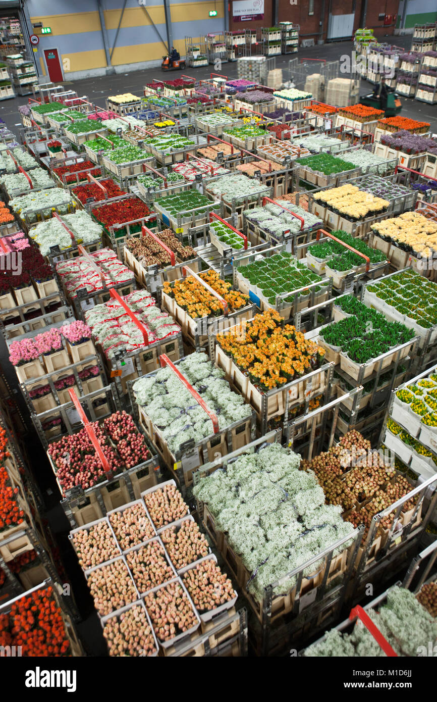 The Netherlands, Aalsmeer, FloraHolland, largest flower auction in the world. - Stock Image