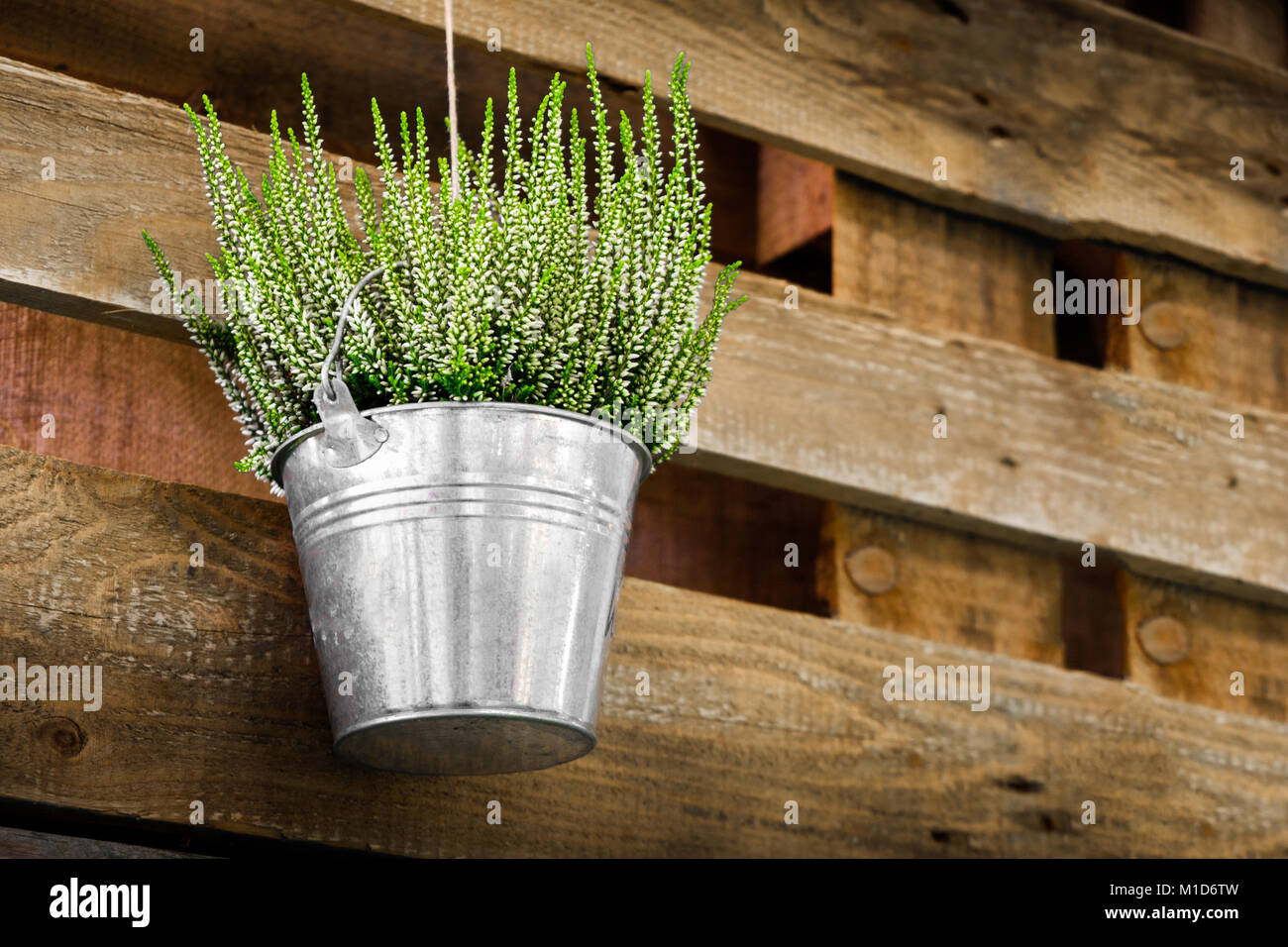 potted plants wooden background heather metal bucket hanging flowerpot flower shop design - Stock Image