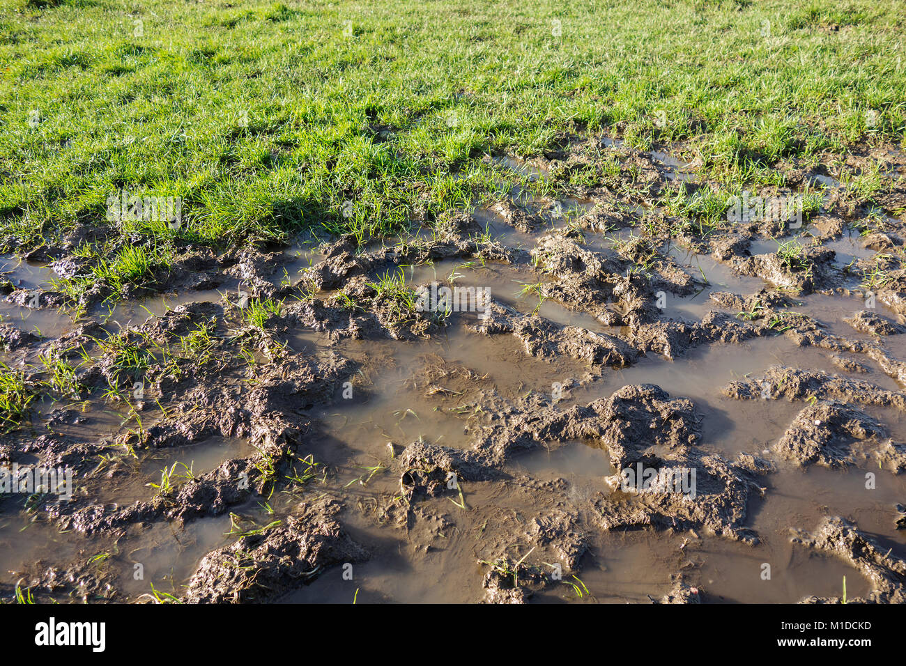 waterlogged flooded muddy sports pitch field garden lawn Stock Photo