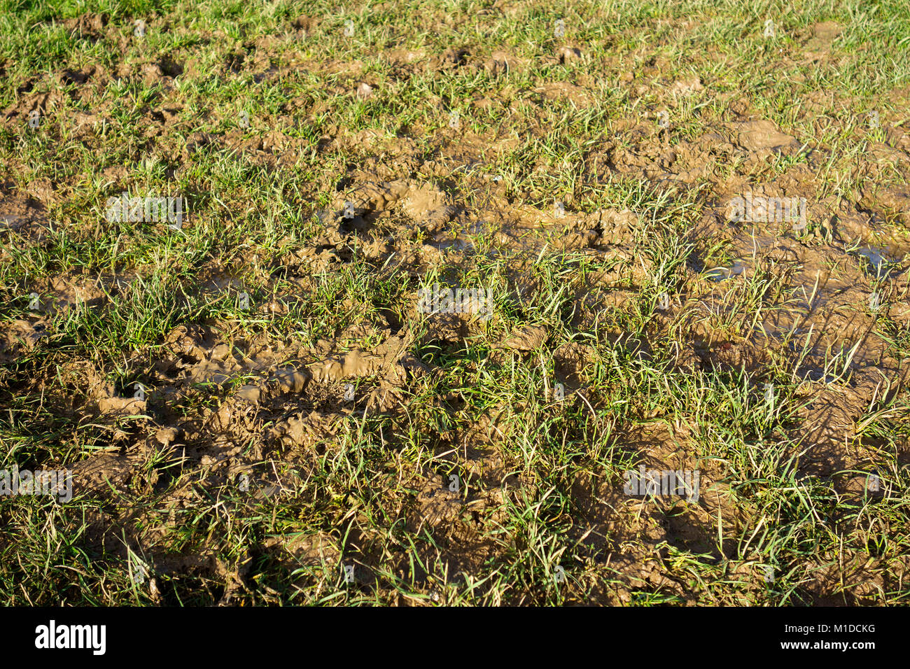 waterlogged flooded muddy sports pitch field garden lawn - Stock Image