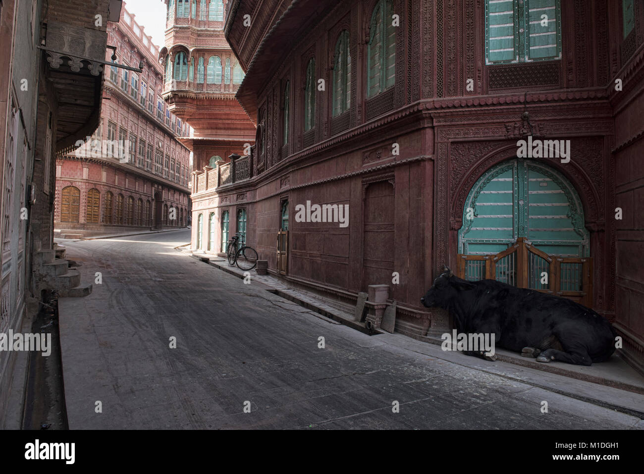 Cow in front of old haveli homes, Bikaner, Rajasthan, India - Stock Image