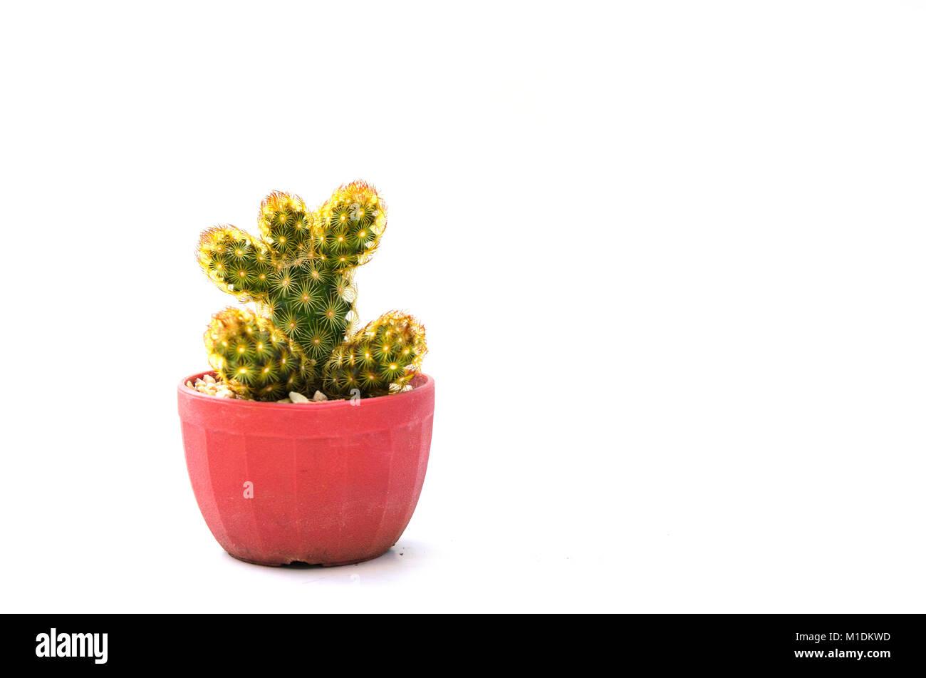 Poisonous Cactus Stock Photos & Poisonous Cactus Stock Images - Alamy