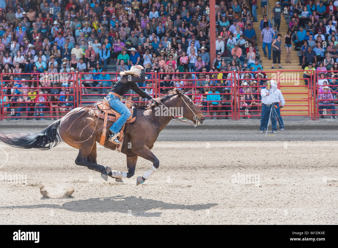 Horse and rider race to the finish line at a barrel racing competition during the 90th Williams Lake Stampede. - Stock Image
