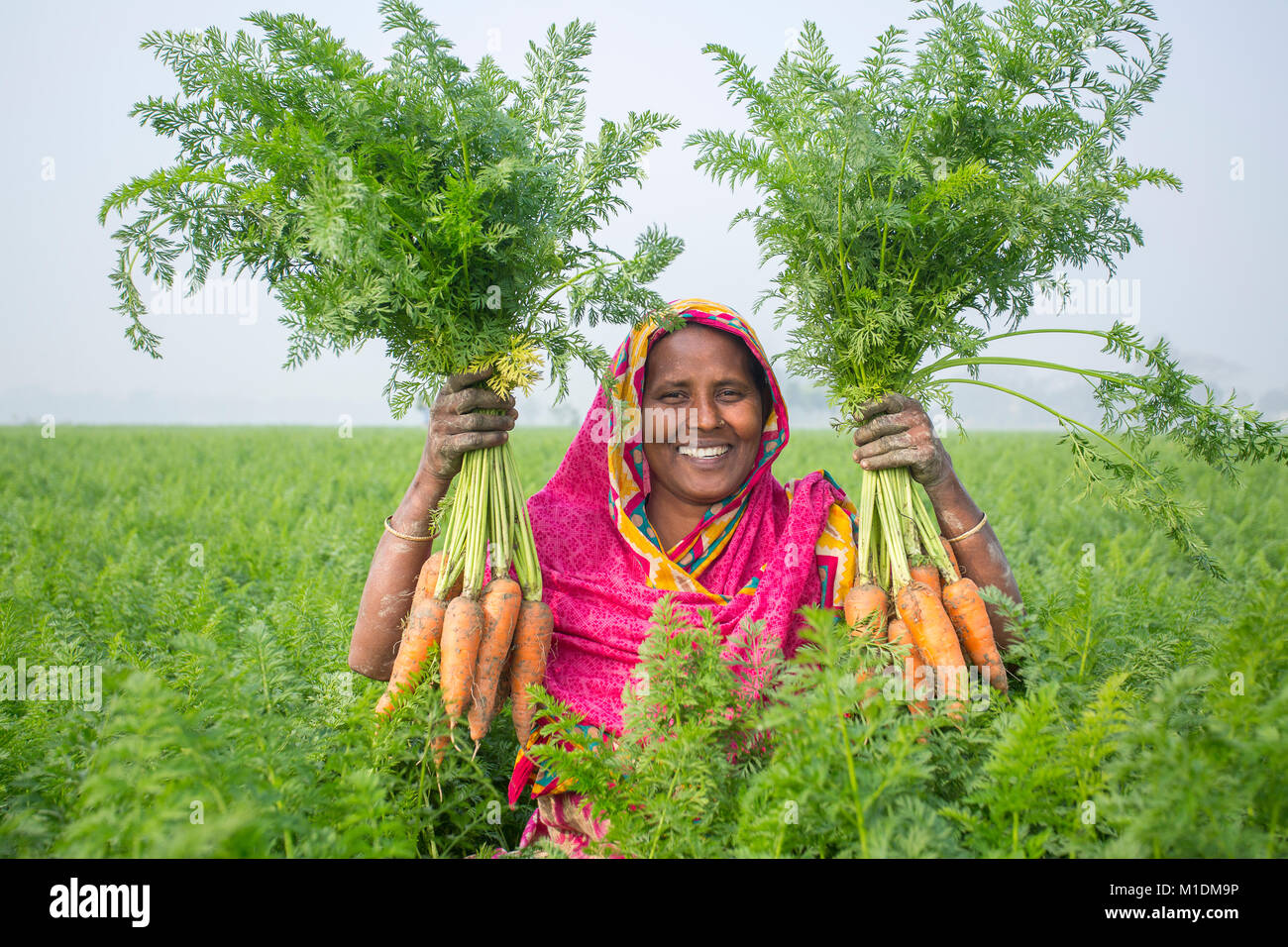 A women farmer satisfied fulfilled crops at Savar, Bangladesh. - Stock Image
