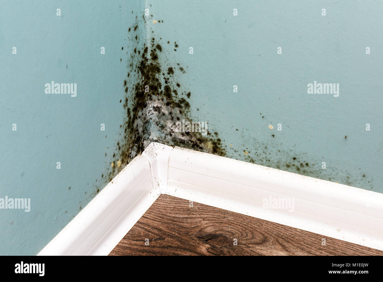 Black mould on wall closeup - Stock Image