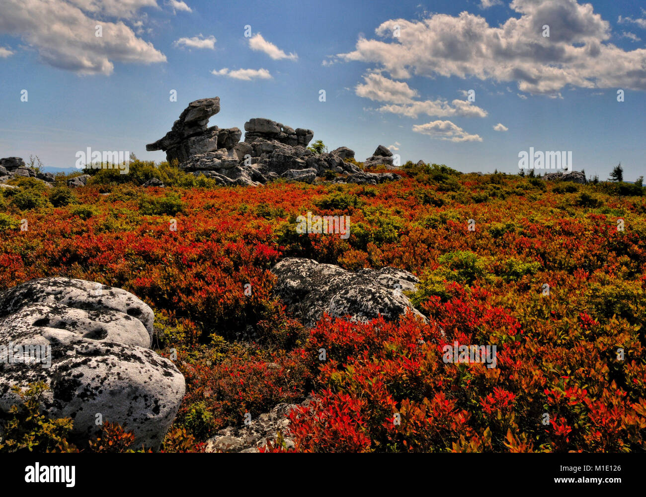 Dolly Sods Wilderness in autumn reds West Virginia - Stock Image
