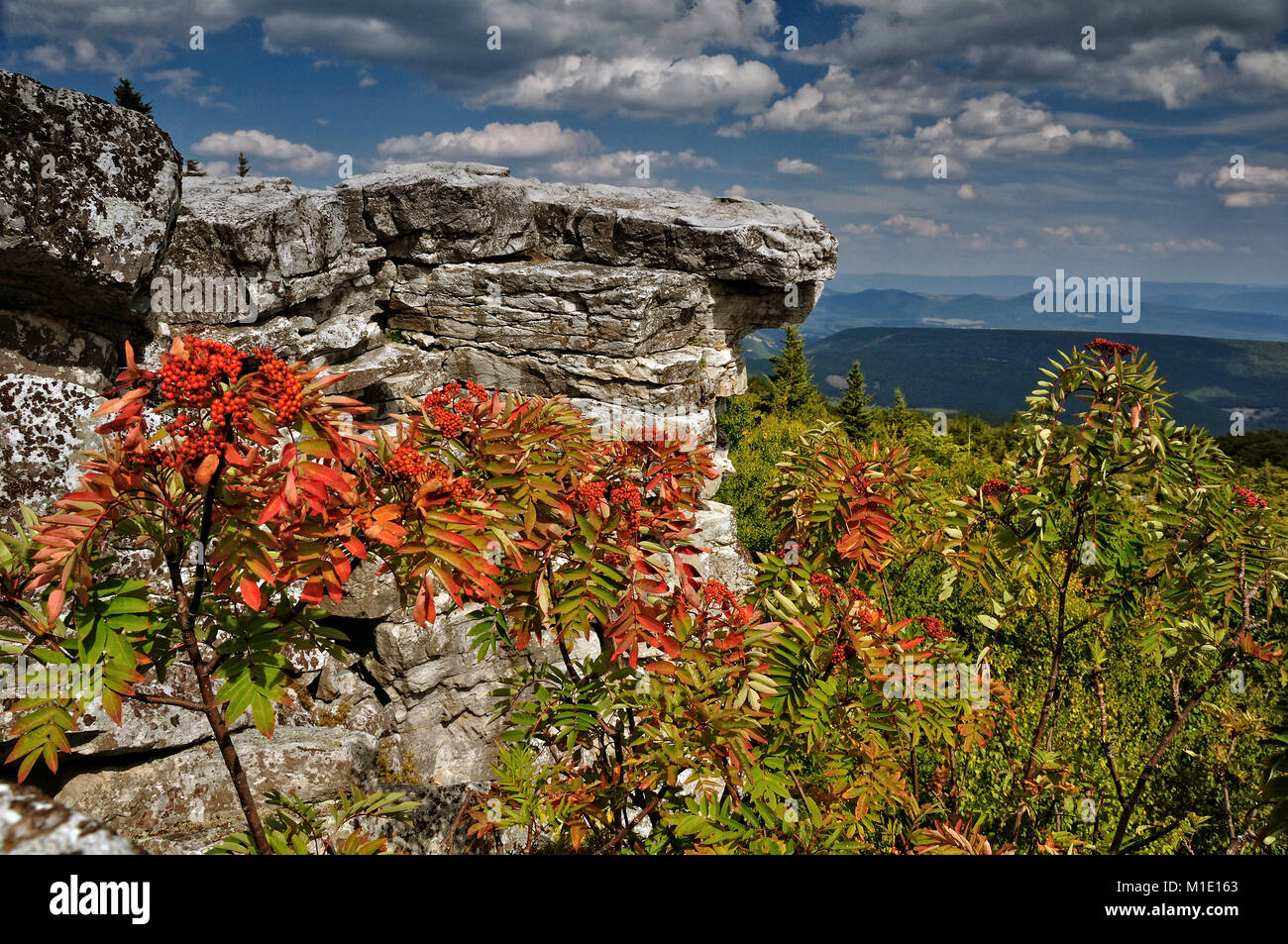 Bear Rocks Dolly Sods West Virginia - Stock Image