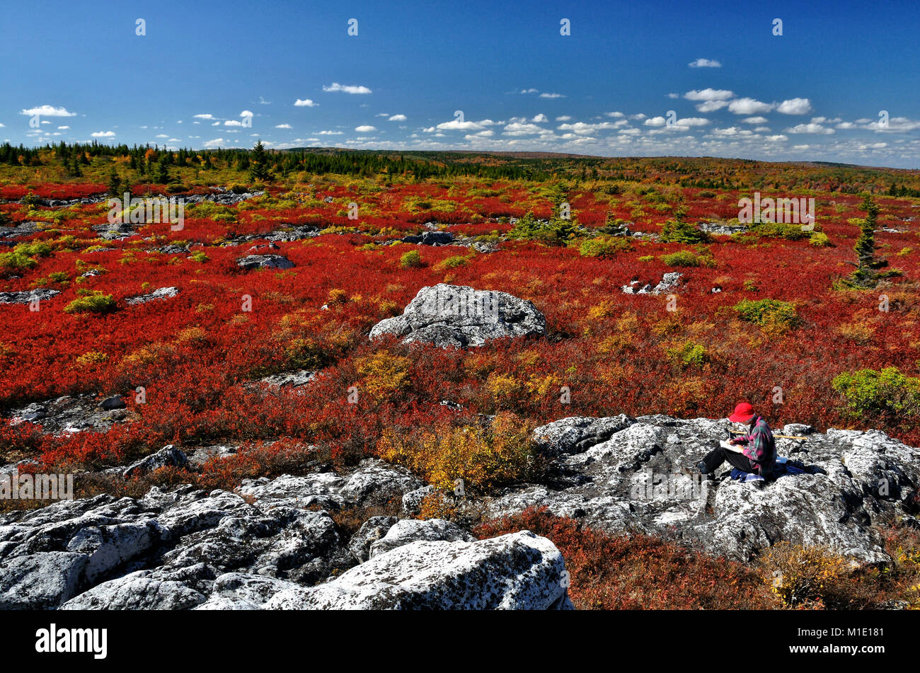 Dolly Sods Wilderness in autumn reds West Virginia Stock Photo