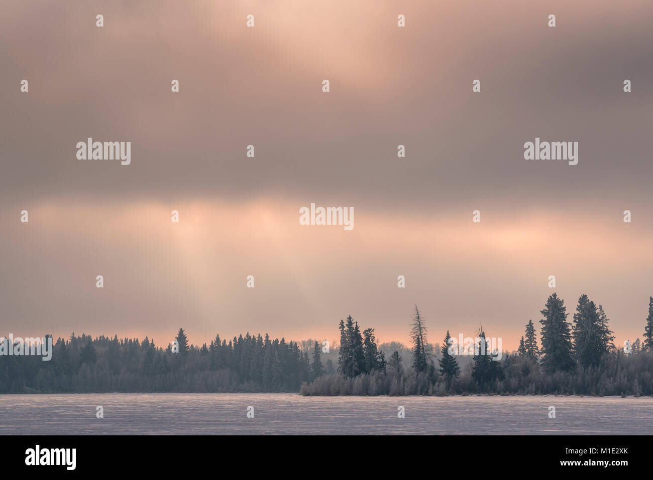Pink sunset, frozen winter landscape, and frozen lake, Elk Island National Park, Canada - Stock Image