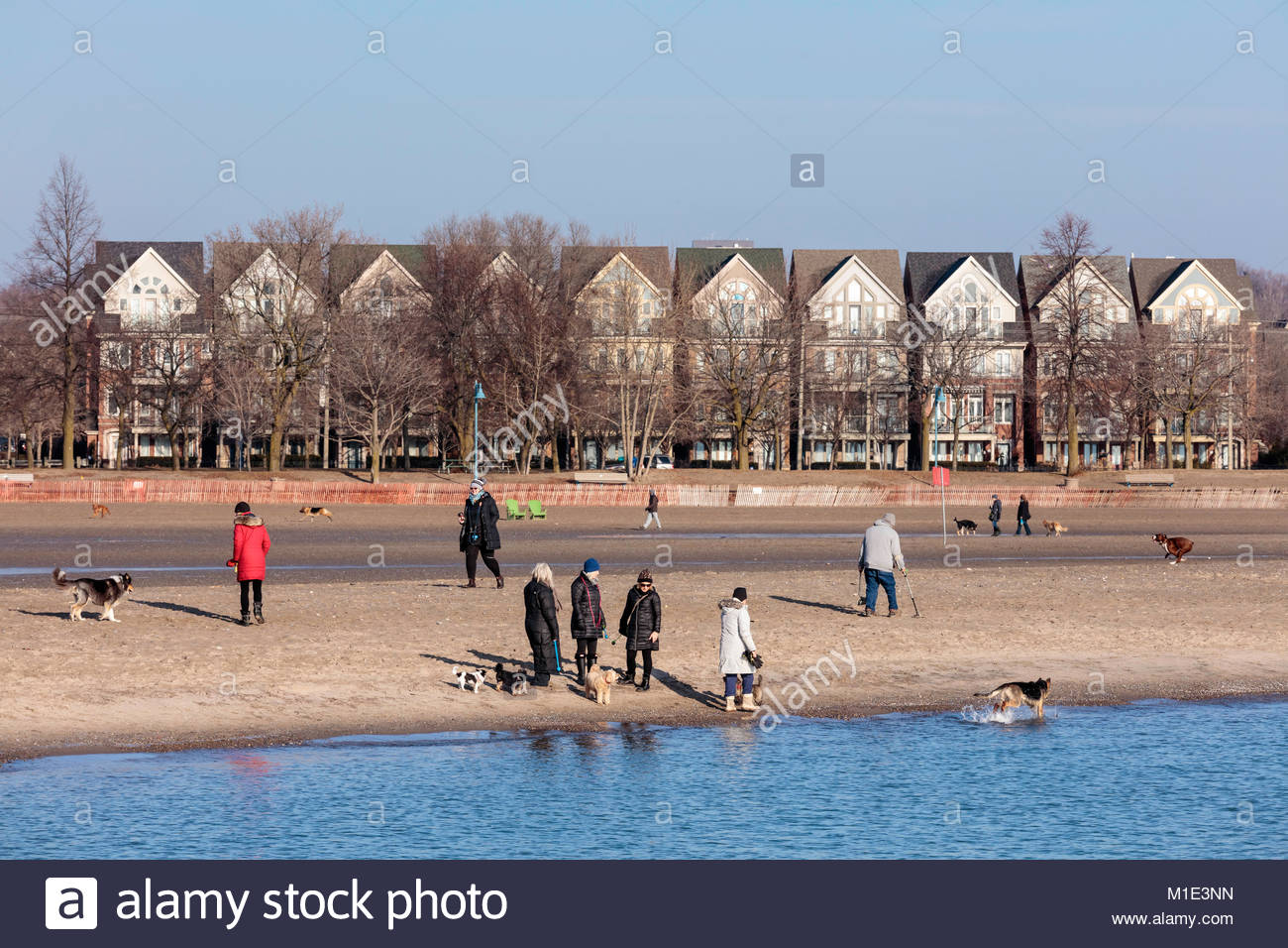 People walking the dog at Woodbine Beach on a warm day in winter in The Beaches area of Toronto Ontario Canada - Stock Image