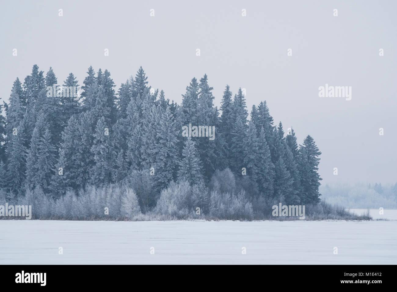 Frozen winter landscape, Elk Island National Park, Alberta, Canada - Stock Image