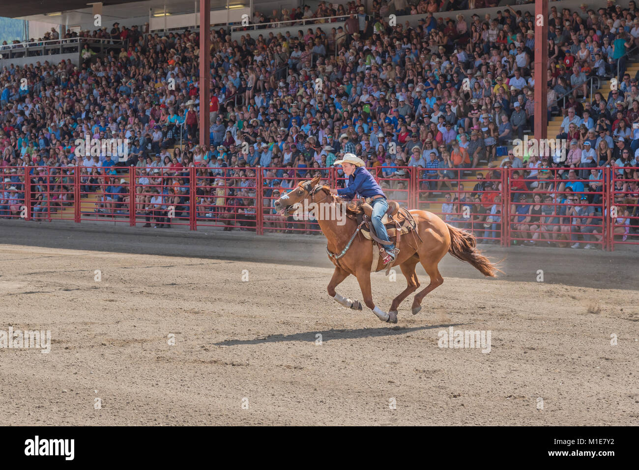A barrel racing competitor urges her horse to the second barrel at the 90th Williams Lake Stampede, one of the largest - Stock Image