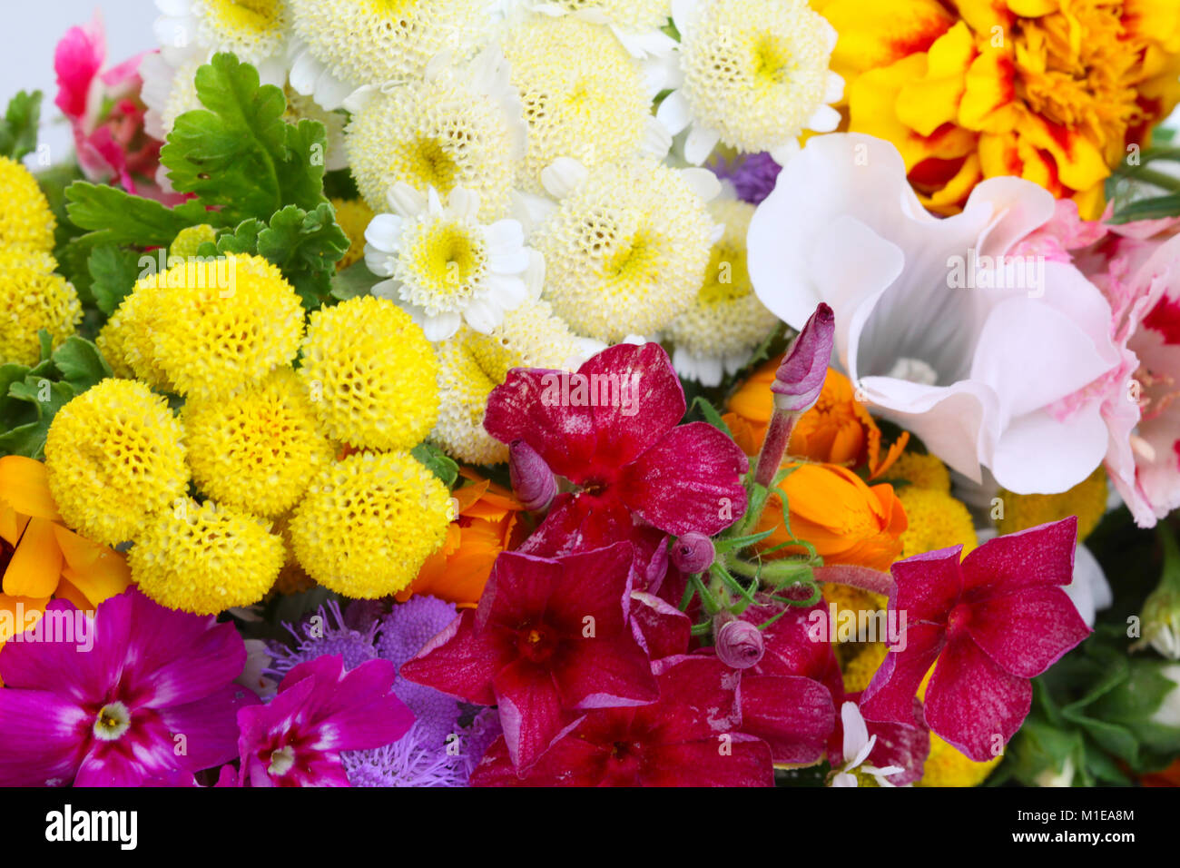 Beautiful colorful flowers close-up. Bright floral background Stock ...