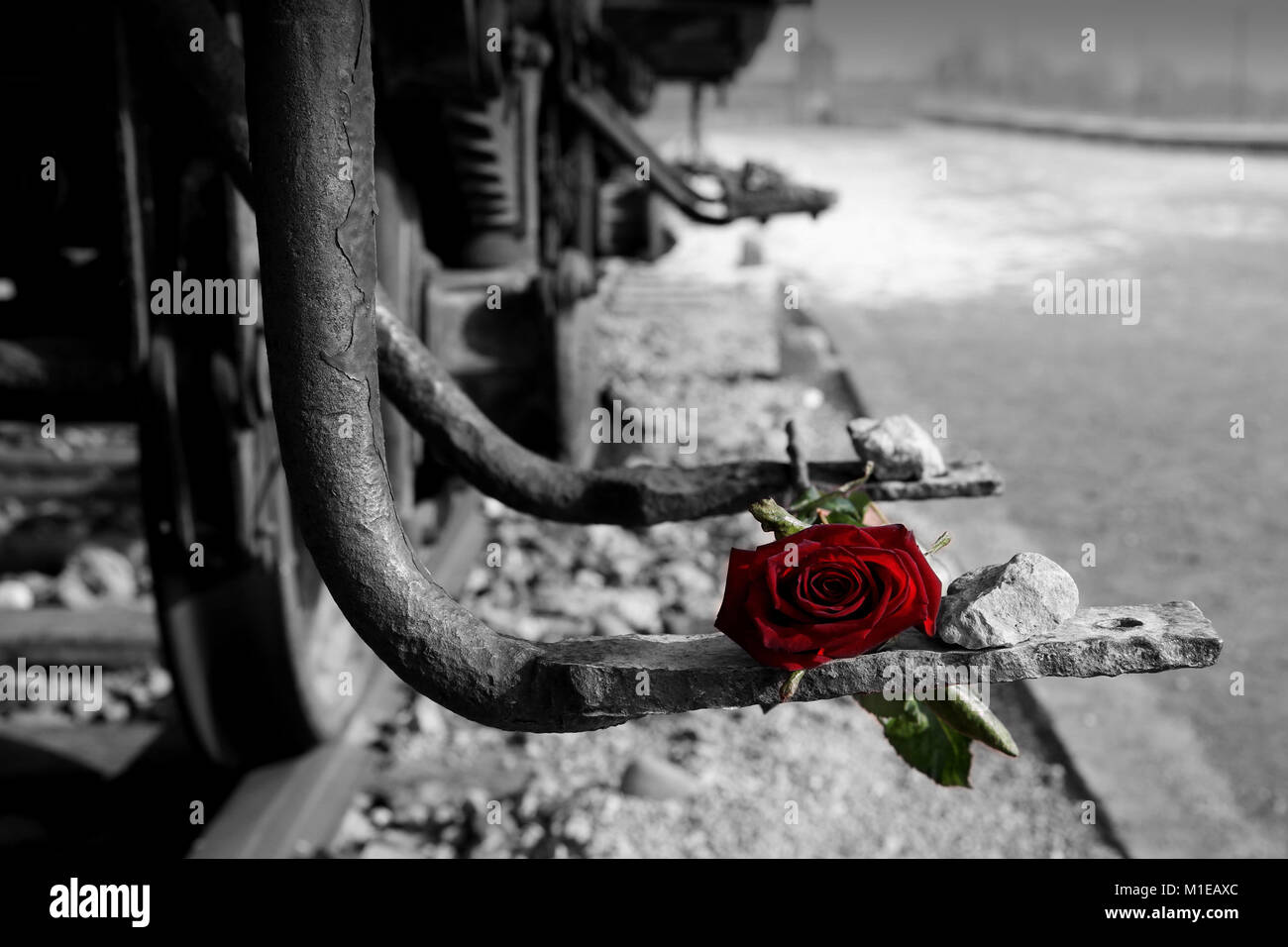 Black and white image of railway carriage with rose in spot colour red on rusty foot plate with blurred auschwitz ii birkenau entrance gate