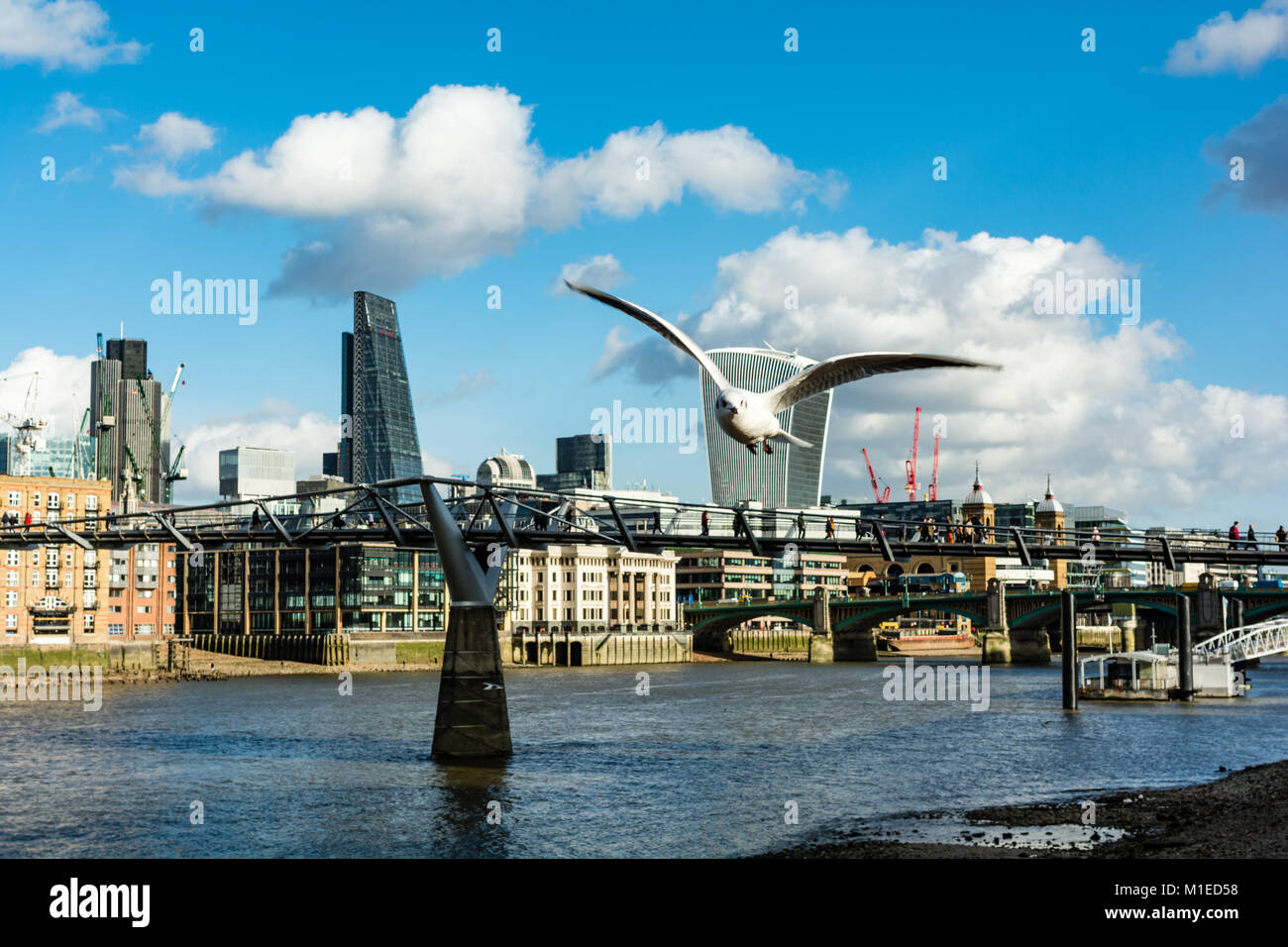 A seagull flies along the South Bank near the Millennium Bridge, partially obscuring the Fenchurch St Walkie Talkie - Stock Image
