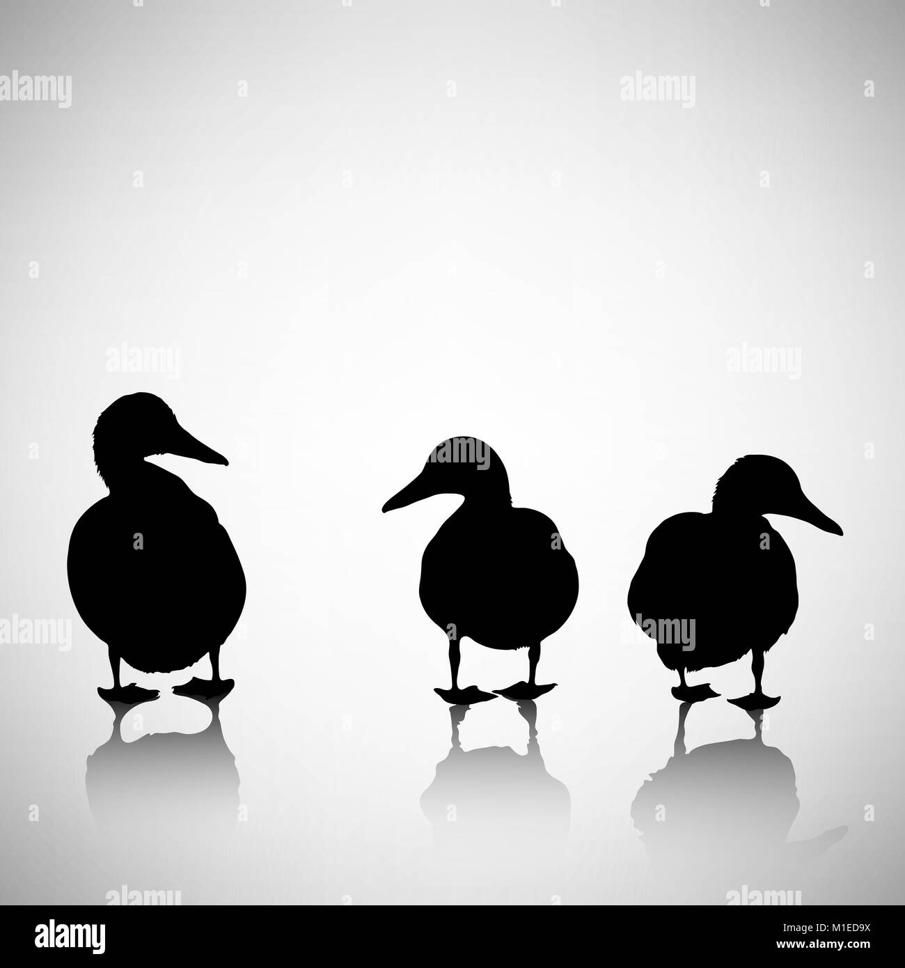 silhouettes of ducks on a light background with reflection - Stock Image
