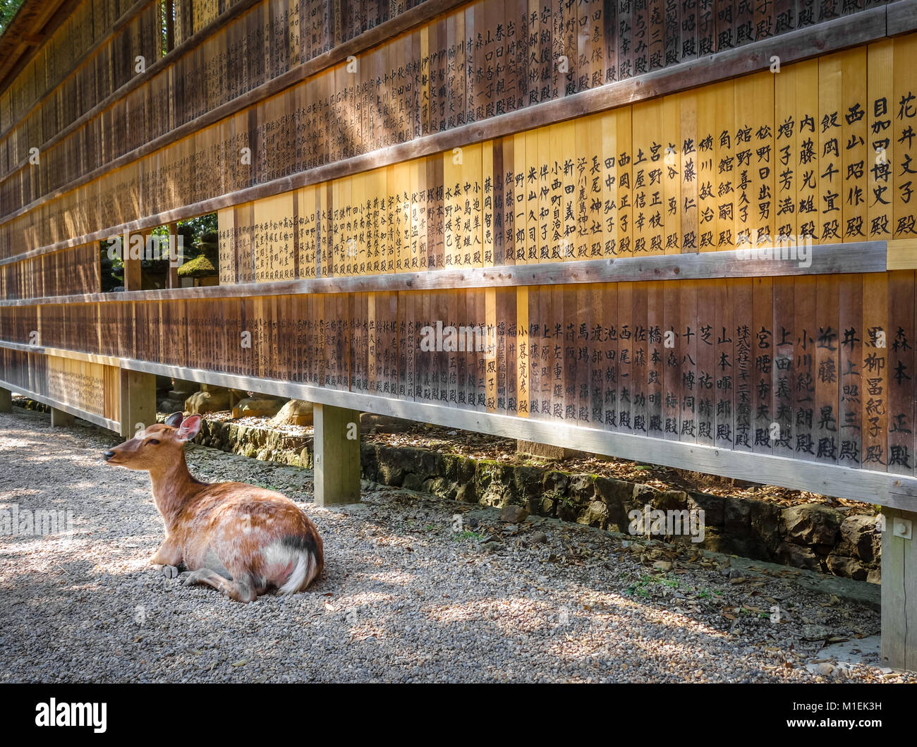 Sika deer in front of Wooden tablets, Nara, Japan - Stock Image