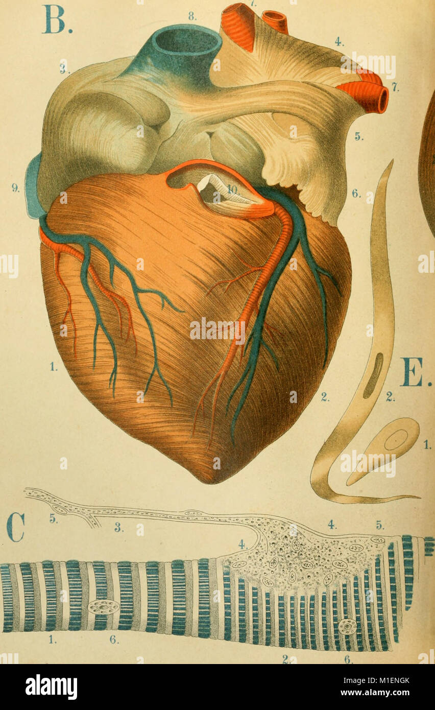 An Atlas Of Anatomy Or Pictures Of The Human Body In Twenty Four