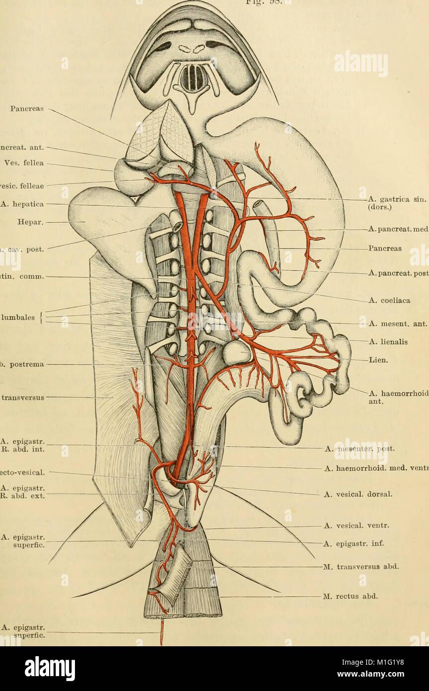 Großartig Untere Extremität Anatomie Notizen Bilder - Menschliche ...