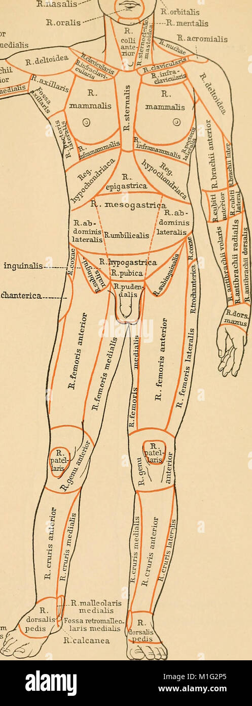 Anatomical Terminology With Special Reference To The B N A 1907