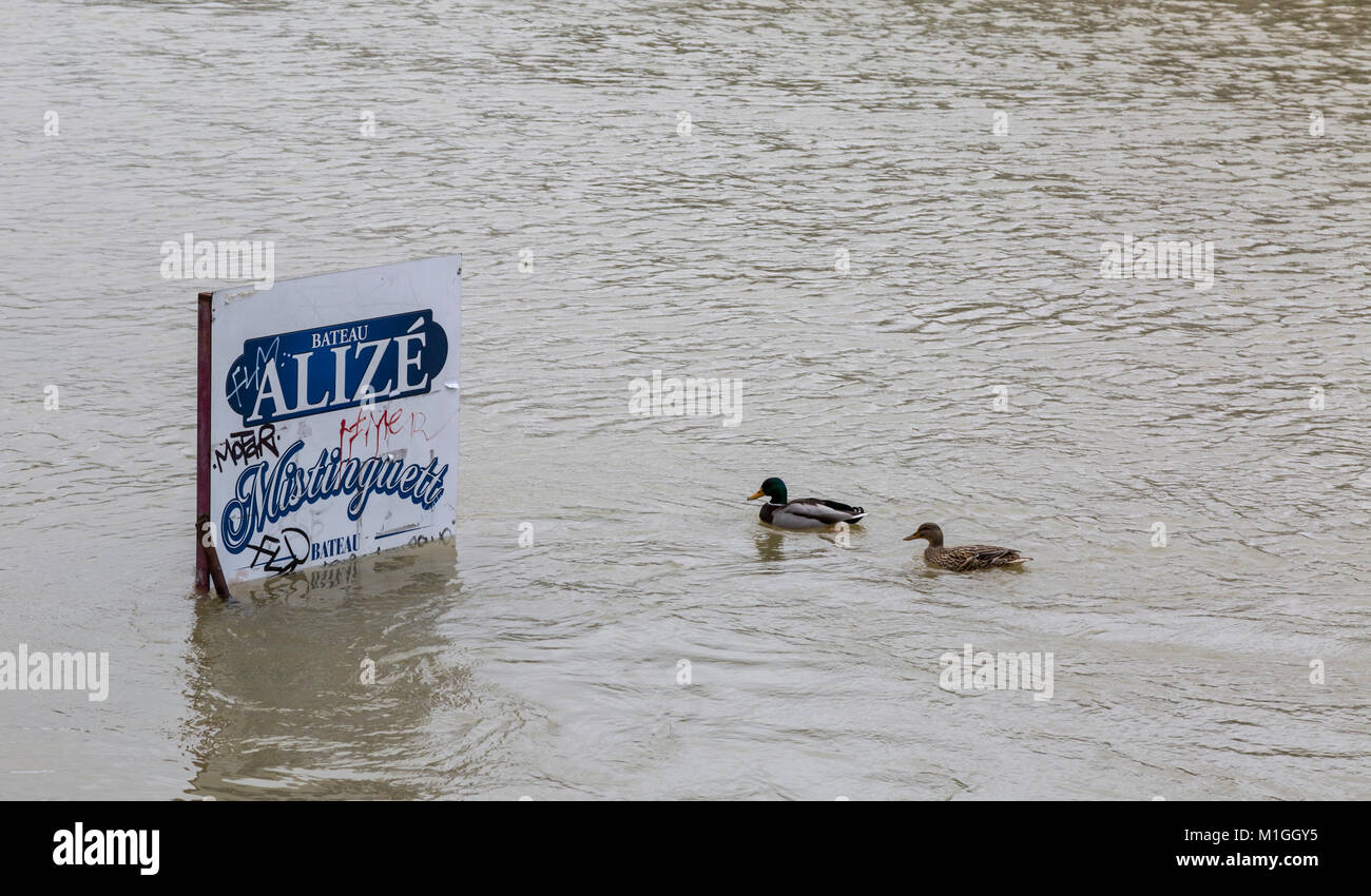 PARIS,FRANCE - January 29, 2018: Two ducks floating in the vicinity of a pole with an ad display on the Seine River - Stock Image