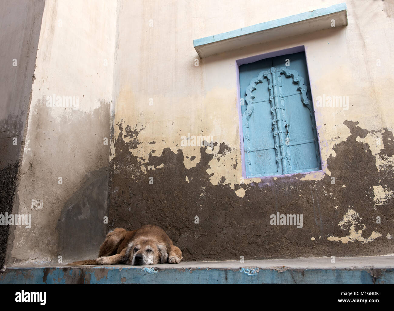Abandoned homeless dog sleeping outside a house in Varanasi  India. - Stock Image