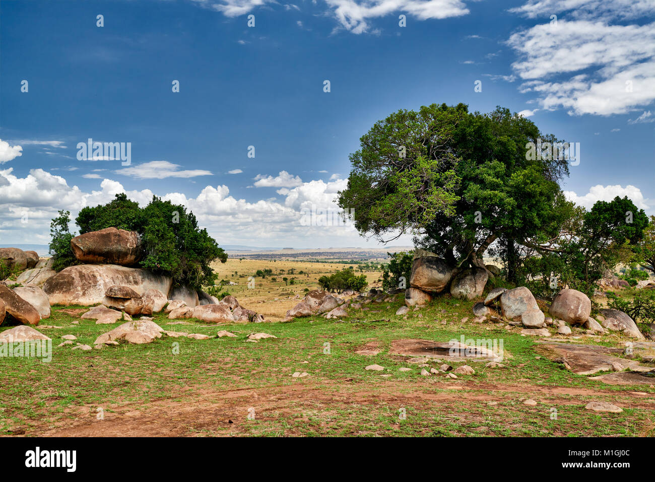 landscape of Serengeti National Park, UNESCO world heritage site, Tanzania, Africa - Stock Image