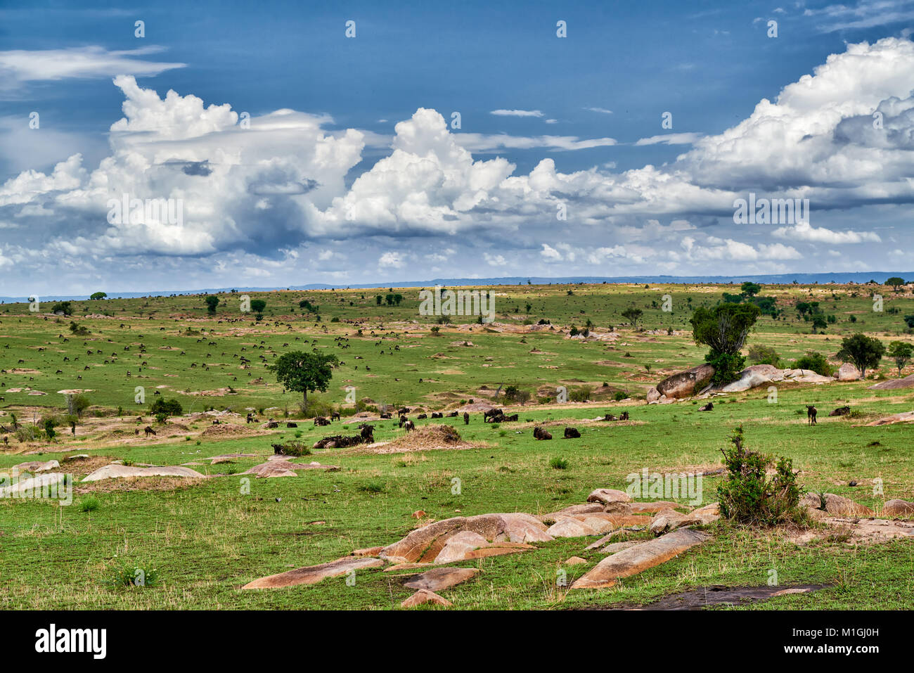 landscape with wildebeest in Serengeti National Park, UNESCO world heritage site, Tanzania, Africa - Stock Image